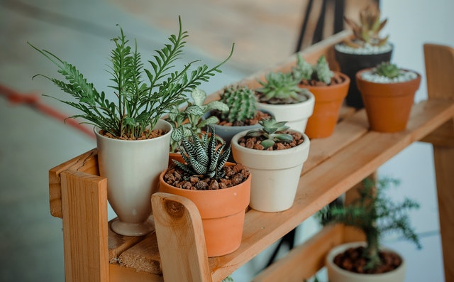 List of 15 Best Indoor Plants For Home