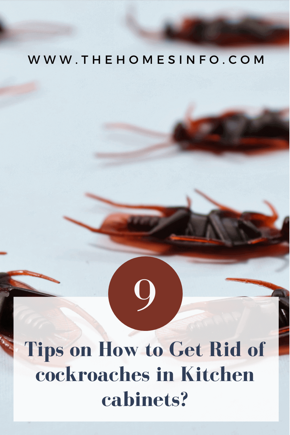how-to-get-rid-of-cockroaches-in-kitchen-cabinets-thehomesinfo